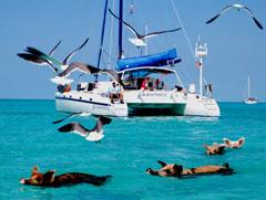 Swimming pigs at Major Cay